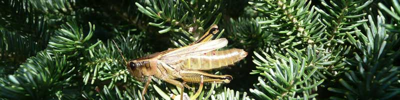 1wildlife-grasshopper