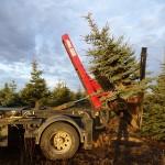 Tree spade - 2